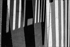 zebroidal - zebraesk (Armin Fuchs) Tags: arminfuchs zebracrossing zebra würzburg stripes light lines shadow floor turned niftyfifty