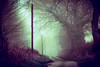 High Strangeness (iratebadger) Tags: nikon nikond7100 nature nikonphotography nikkor d7100 dark depthoffield dof distance fog mist trees countryside country vignette vintage vanishingpoint rural road countrylane england eastridings lightroom light shadows winter woods bleak iratebadger