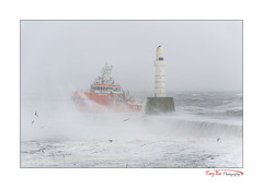 Nearly Home_9556 (The Terry Eve Archive) Tags: beastfromtheeast storm siberianwind gales gulls waves aberdeenharbour harbourwall