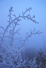 Branch reaching for the sky (Kerlund74) Tags: frost frosty frozen freezing winter outdoors cold nature naturesart natur hiking hikingtrail walking walk sky fog branches grass