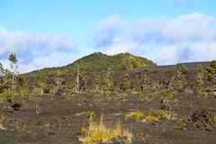 Pu'u Huluhulu Rises Above A Basalt Flow (wyojones) Tags: hawaii hawaiivolcanoesnationalpark maunaulu maunauluparkinglot pu'uhuluhulu cindercone tephra cinder lavaflows basalt wyojones np
