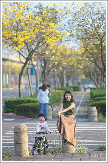 南科 黃花風鈴木 新市區.台南私藏景點 (4)