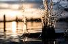 Liquid (--Conrad-N--) Tags: sony sunset saarow bad kurort shadow scharmützelsee splash dof drops water reflection reflections light a7rm2