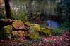 in the wood (Riboli Alessandro) Tags: bosco autunno foglie colori colors sassi rocce stone alberi acqua ruscello fosso bokeh wood