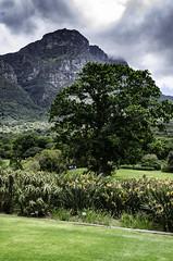 Kirstenbosch (timhughes8) Tags: nikon d7000 westerncapeprovince southafrica gardenroute kirstenbosch botanicalgardens capetown