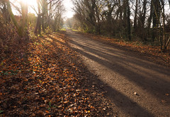 long shadows along the trail (Johnson Cameraface) Tags: 2017 december autumn olympus omde1 em1 micro43 mzuiko 1240mm f28 johnsoncameraface doncaster southyorkshire transpenninetrail shadows sunshine mist
