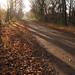 long shadows along the trail