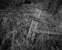 Broken Fence (Stanley Burn Woods) (Jonathan Carr) Tags: berggerpancro400 woodland trees rural northeast blackandwhite bw monochrome toyo45a largeformat 4x5 5x4