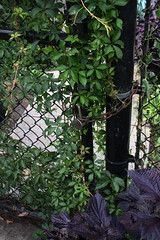 The Secret Garden (ktmqi) Tags: sargentjosephanthony playground park hudsoncounty jerseycity jerseycityheights newjersey secretgarden urban