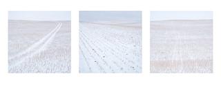 One Field Triptych