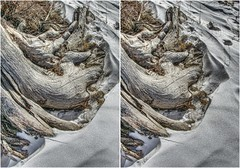 Cold Roots (turbguy - pro) Tags: 3d crosseye stereo laramie wyoming medicinebownationalforest