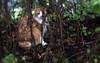 Hiding in Plain Sight (Anne Worner) Tags: animal anneworner em5 cat eyes feline fluffy fur hiding kitty longhair olympus shy whiskers