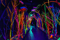 underwater forest (rovingmagpie) Tags: newmexico santafe meowwolf houseofeternalreturn immersiveart art bday2018 underwater forest shadows trees colorful colors