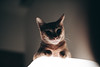 (Cat Zheng) Tags: fujifilm xseries xpro2 mitakon 35mm f095
