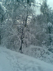wintertime after snowfall (VERUSHKA4) Tags: nokia russia moscow snowfall neve neige europe city ville view vue outdoor park kuskovo branch bough trunk february hiver winter season path track