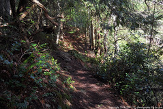 2018-02-10 Whistle Lake Trail 204 (13) (1024x680) (-jon) Tags: anacortes skagitcounty skagit fidalgoisland sanjuanislands washingtonstate washington pnw pacificnorthwest salishsea pugetsound acfl anacortescommunityforestlands whistlelake lake trail 204 nikon nikoncoolpixl22 tree douglasfir a266122photographyproduction kennyoakes