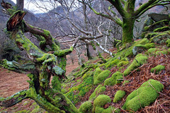 Borrowdale Rainforests (PJ Swan) Tags: green borrowdale trees woodland england lake district temperate rainforest great britain greenery