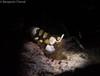 14022018-_1230728 (chevalbenjamin) Tags: philippines visayas bohol underwater underwaterphotography snoot macro macrolife dive scubadiving plongéesousmarine seaocean