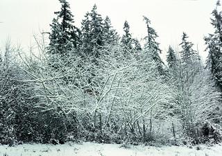 Willow Border Snow