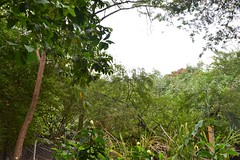 DSC_2144 (Arianna León) Tags: parqur parque historico gye gua guayaquil guayas photography nikond3100 ary art nature museum