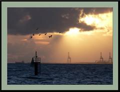 Lumix FZ20 (agphoto100) Tags: lumix fz20 dawn light orton maker cranes rays sunrise birds seagulls water sea calm ship horizon brisbane port ocean