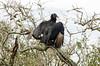 Black Vulture Drying Its WIngs DSC_0485_edited-1 (John Dreyer) Tags: atlanticocean blackvulture vulture nikon nikond5100 audubon birding copyright2018johnjdreyer florida merrittislandnationalwildliferefuge
