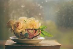 A cup of roses (Inka56) Tags: roses cup book bokeh light prettyinpink crazytuesdaytheme 7dwf stilllife