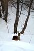 PIO_0564m (MILESI FEDERICO) Tags: milesi milesifederico montagna montagne mountain italia italy iamnikon inmontagna inverno ice wild winter piemonte piedmont visitpiedmont valsusa valliolimpiche valdisusa valledisusa sauzedicesana cittàmetropolitanaditorino freddo nikon nikond7100 nital natura nature nat neve nevicata snow 2018 gennaio alpi alpicozie altavallesusa altavaldisusa d7100 dettagli details wildlife vita life animal animale capriolo mammifero ngc ngg europa europe explorer