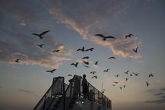 Dauplin Island Ferry (mondaytuesdaywednesday) Tags: dauphinislandferry ferry alabama florida gulfofmexico seagull cloud sky bird sunset outdoor mobilebayferry