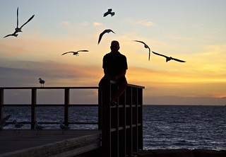 Seagull Sunset Caress