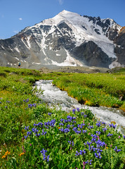Towards Ak-Oyuk (deletio) Tags: grass nikkornc24mmf28 russia 2017 nature water mountains flowers green glacier d700 altay snow altairepublic russianfederation sevenlakesvalley purple