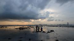 Cyrene Reef (wildsingapore) Tags: cyrene reef landscape weather singapore marine intertidal shore seashore marinelife nature wildlife underwater wildsingapore