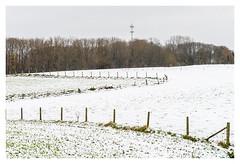 White Kesterheide (P_Hibon) Tags: belgie belgium gooik bomen bos pajottenland sneeuw snow white wit trees paaltjes zendmast antenne antenna z