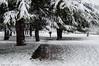 She's gone. (Marina Arrue) Tags: ciudadela nieve pamplona snow white navarra winter trees explore