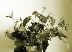 Flowers in sepia (M Chiara B) Tags: sepia stilllife naturamorta fiori 7dwf flowersinsepia