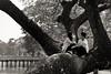 Kandawgyi Park. Yangon (Igorza76) Tags: myanmar república unión birmania republic union burma asia sudeste asiático southeast rangún yangón yangôn antigua capital yan koun yangon ရန်ကုန်မြို့ rankun mrui rangoon parque park bogyoke kandawgyi lake lago arbol tree paraja couple novios amor love mirada look glance blanco negro zuri beltz baltz black white bw bn zb fuji xt10 2017 rangun bidaia bidaiak bviaje oporrak vacaciones viajes