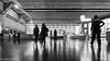 South Kensington -18   30012018.jpg (Colin Dorey) Tags: bw blackwhite monochrome blackandwhite southkensington museums galleries exhibitionroad cromwellroad rbkc kensington reflection shadow people sciencemuseum ceiling