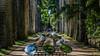 Caminho Inverso - TRIO Bienal (Eden Fontes) Tags: jardimbotânico gustavoprado triobienal instalação jb caminhoinverso rj jbrj bienaltridimensionalinternacionaldoriodejaneiro2017 riodejaneiro