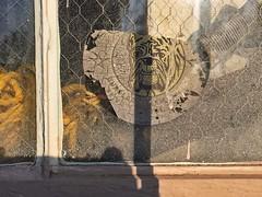 Guard Dog (misterbigidea) Tags: watchdog peekinside shadow yellow warehouse sign warning burglar alarm decal logo decay bulldog guarddog abstract urban texture window