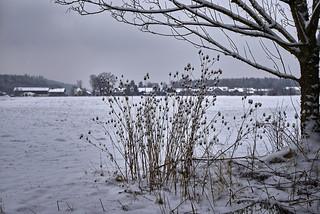 Winter am Feldrand