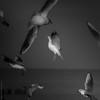a little story about seagulls ... VII (Buecherkoenig) Tags: ostsee 2018 winter deutschland germany norddeutschland ostdeutschland nikon d7200 februar mecklenburgvorpommern february balticsea baltic wasser water meer sea küste strand beach buecherkoenig