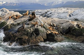 Beagle Channel, sea lions