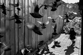Run! Fly! /  games children play