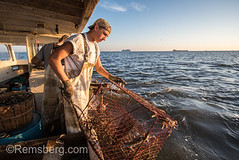 Young waterman pulling in crab trap onto boat on the Chesapeake Bay with the horizon in the background, Dundalk, Maryland. (Remsberg Photos) Tags: outdoors crabs callinectessapidus chesapeakebluecrab atlanticbluecrab bluecrab decapod maryland symbol crustacean seafood waterman watermen crabber fishing boatman easternshore crabbing manuallabor occupation trap fishingbait crabpot fishingboat nauticalvessel commercialfishing net youngman dundalk