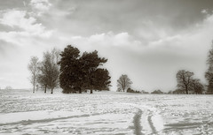 Snow and trees ... (Julie Greg) Tags: snow trees texture tree park sky england kent water winter landscape