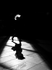 Punk's not dead (René Mollet) Tags: punk blackandwhite bw basel backlight street streetphotography shadow silhouette streetart streetphotographiebw photo18 photoschweiz photoschweiz18 renémollet urban urbanstreet