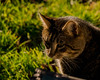 EOY.320.1_320 s.f_9.300.0 mm.4809.jpg (Jonitron) Tags: digitalphotography color tacomawa 2017 jonitron 28300mmf3556 nikon d610