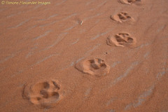 Footprints (simone_a13) Tags: morocco sahara desert sand footprints orange maroc