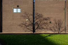 Winsford Library (Gary Kinsman) Tags: shadows canoneos5dmarkii canon5dmkii 2017 empty quiet newtopographics topographics noone desolate urbanlandscape canon28mmf18 urban winsford cheshire winsfordlibrary library architecture shadow tree brown brick suburbs town smalltown modernism modernist blank wall thenorth suburban nothing banal bleak newtown crossshoppingcentre