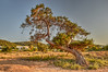 Afternoon at the Tree (Argiriou Vassiliki) Tags: tree landscape nature sky outdoors wood scenic no person flora park travel grass environment summer greece aegina argosaronic afternoon saronic golf colors greek islands nikon d5300